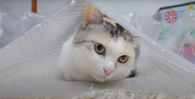 猫ちゃんの新しい寝袋?!だけどやっぱり…
