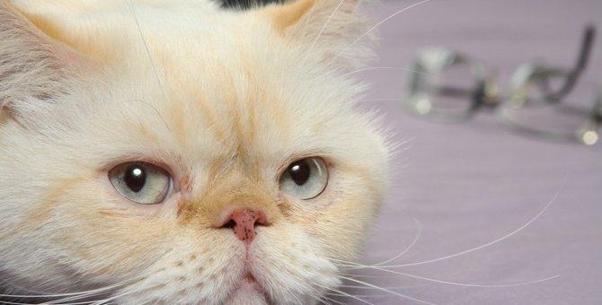 猫が『人間不信』になるNG行為5つ