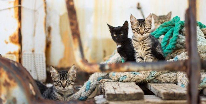 絶対ダメ!野良猫への『タブー行為』5つ