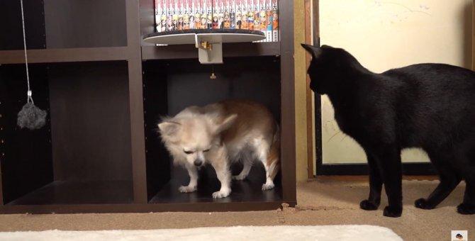 居場所がないワンちゃんと、それを見守る猫ちゃんの日常