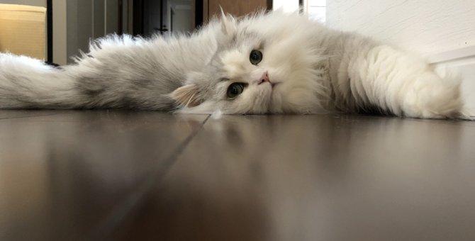 猫がトイレやお風呂についてくる理由4つ