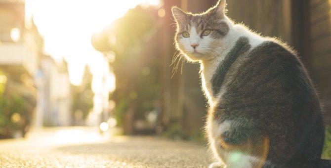 猫の胸水とは?症状や原因、抜き方や治療の方法