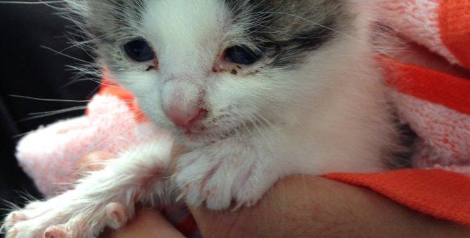家の壁から猫の声…!?子猫の救出劇を体験