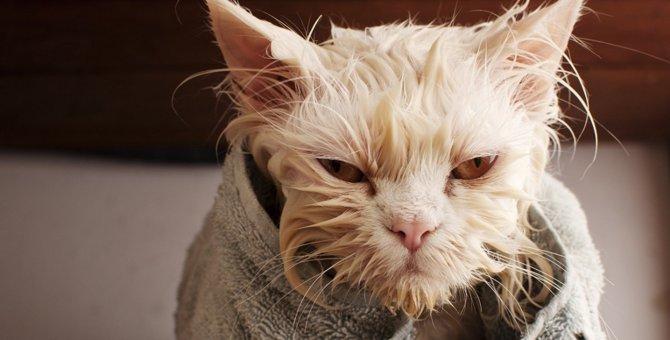 猫のシャンプーで『絶対やってはいけないNG行為』4選
