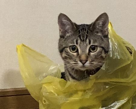 【あるある】やらかし猫の犯行現場5つ