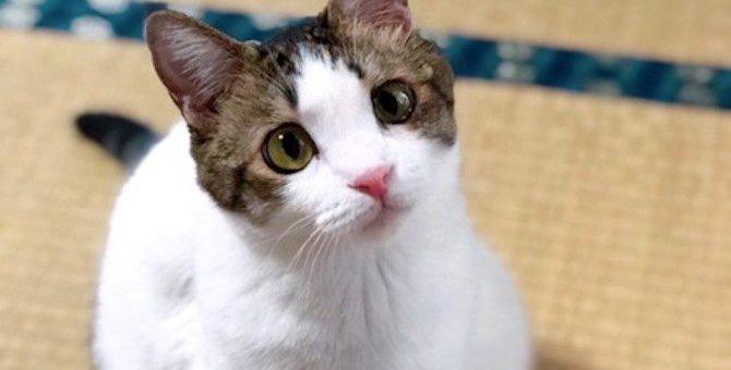 猫はブロッコリーを食べても大丈夫?与えるときの注意点3つ
