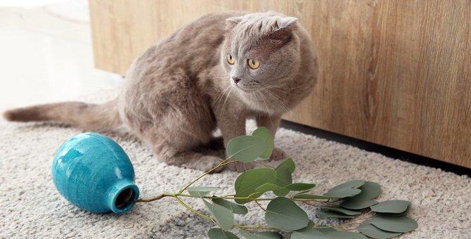 猫が棚や机から「わざと」物を落とす理由5つ