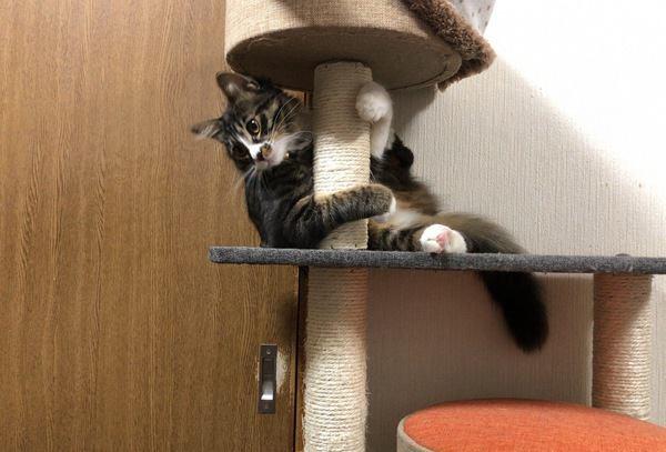 猫が機嫌よくお留守番できるためにしてあげたいこと6つ