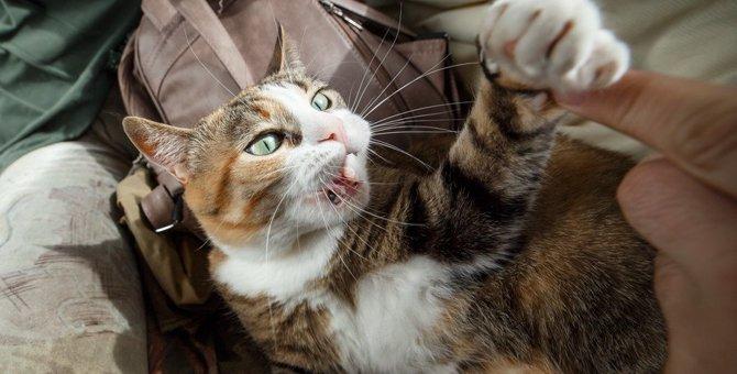 なぜ猫は飼い主に八つ当たりしてくるのか?理由は?やめさせる方法まで