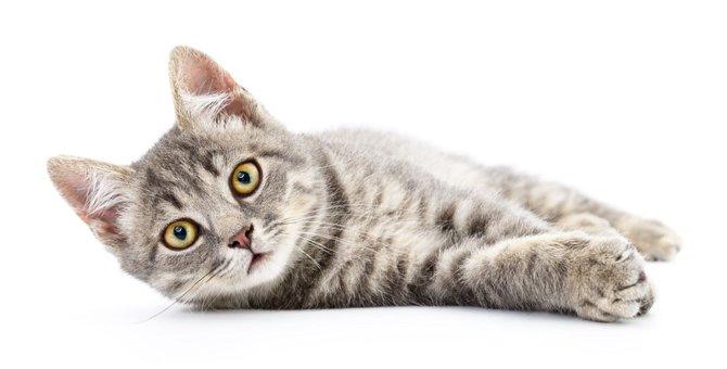 猫の去勢手術についてのメリットと注意点