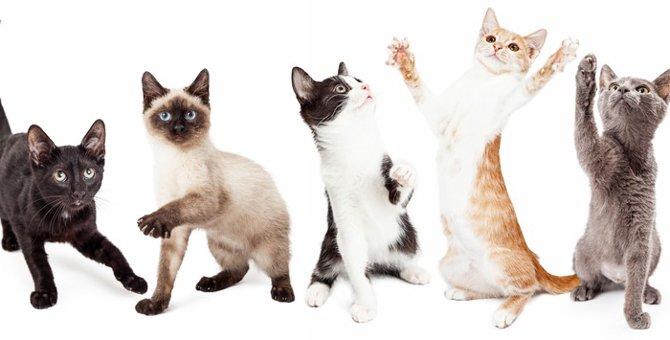 猫の生態の知られざる7つの不思議