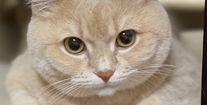 猫が『アイコンタクト』を取るときに訴えていること4つ