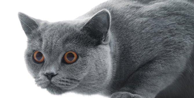 猫ちゃんとのダルマさんゲームはタイミングが重要