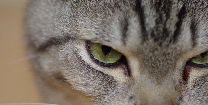 猫が急に狂暴になる3つのタイミング