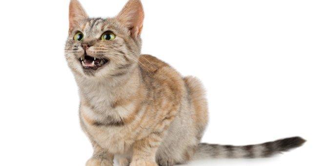 猫を喜ばせる『飼い主の言葉』ランキングTOP3
