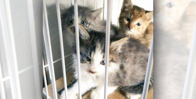 茂みに隠れ住んでいた野良猫家族を必死の保護!別々の道でも幸せを探そう
