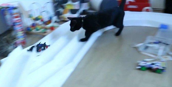 ミニ四駆vs猫ちゃん!早いのはどっち?