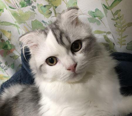 猫が自分のことを王様だと思っている時の仕草や行動5選
