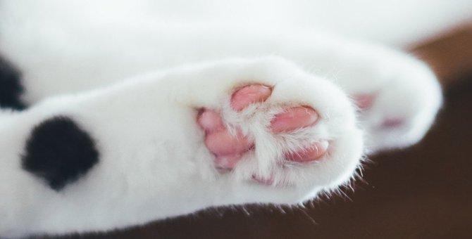 なぜ猫の肉球は香ばしい匂いがするのか?