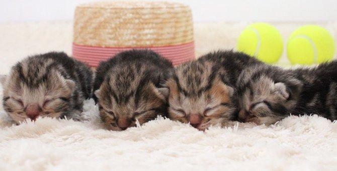 子猫の目が開かない!開くようになる期間や目の病気について