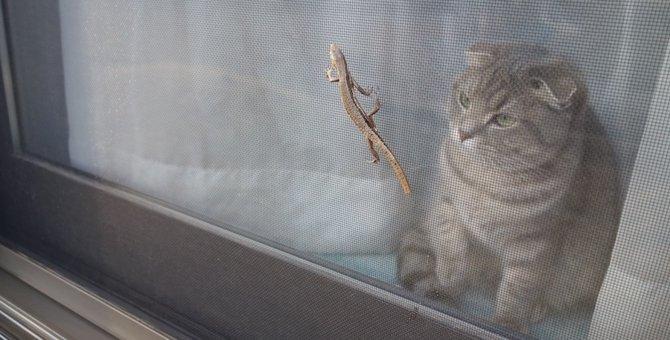 猫が網戸を破ってイタズラをするのはどうして?飼い主が対策出来る5つの方法