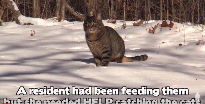 マイナス28℃の極寒の中、置き去りにされた猫たちを救助!