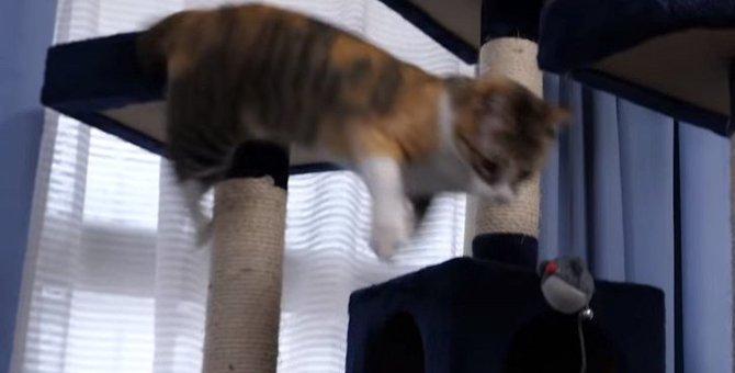 はしゃぎすぎにご用心!キャットタワーからずり落ちちゃった猫ちゃん