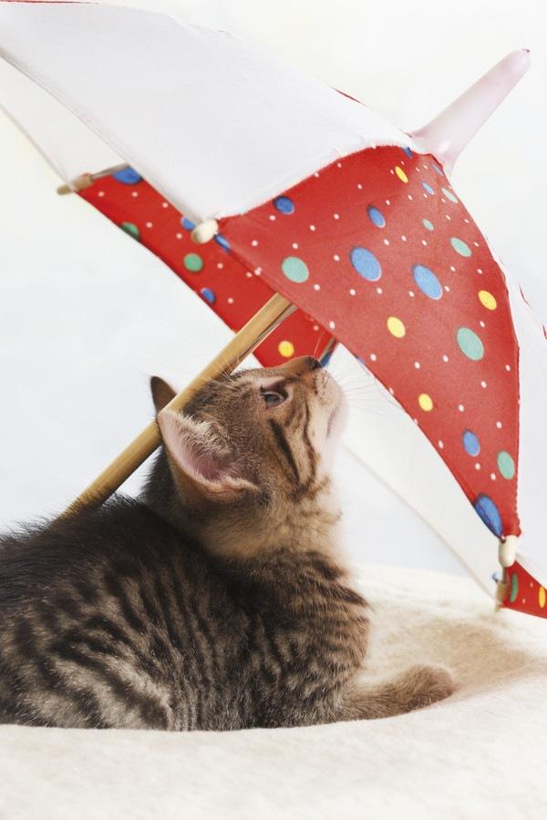 猫柄の傘がかわいい!梅雨の時期にも使いたいおすすめ商品7選
