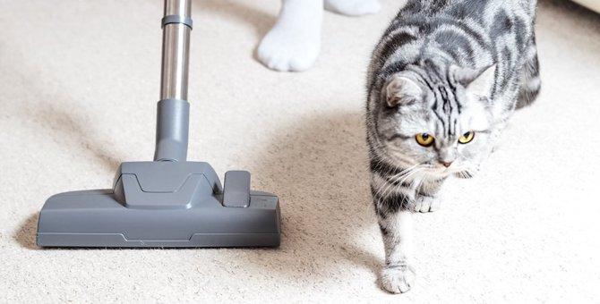 猫がほこりを食べちゃった!誤飲の対処法やしつけ方など