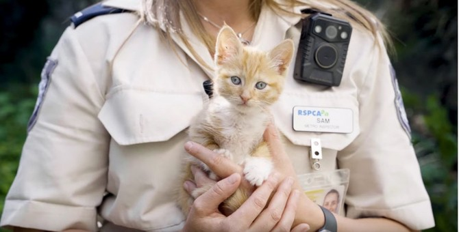 ゴミ箱から発見された子猫は、爆竹をテープで巻きつけ火をつけられていた