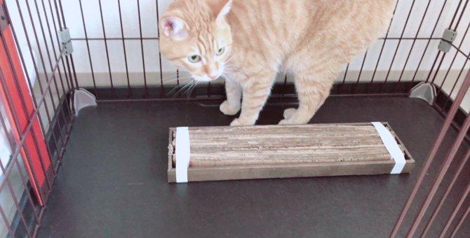 お家にあったダンボールで猫のために爪とぎを新しくリニューアル!