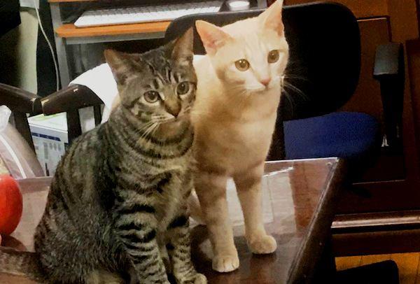 猫のごはんを「置きエサ」しない方が良い4つの理由