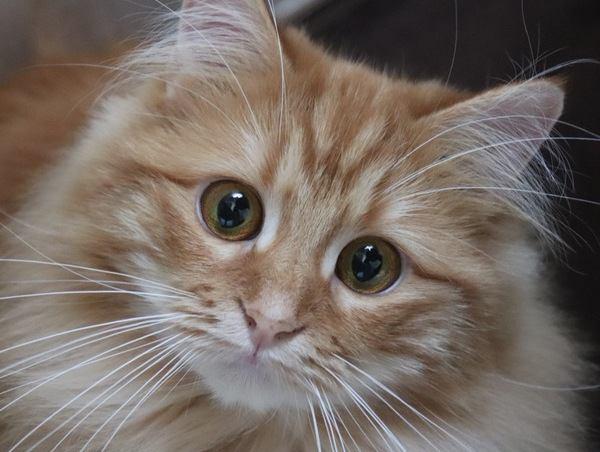 飼い主さんのここが好き♡愛猫が見ているポイント4つ