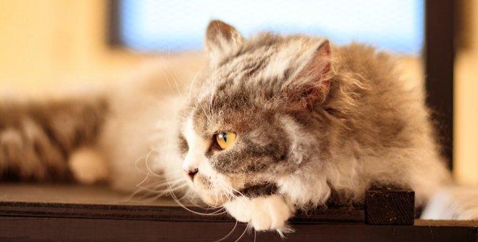 猫の心が離れるかもしれない最悪の『NG行為』3選