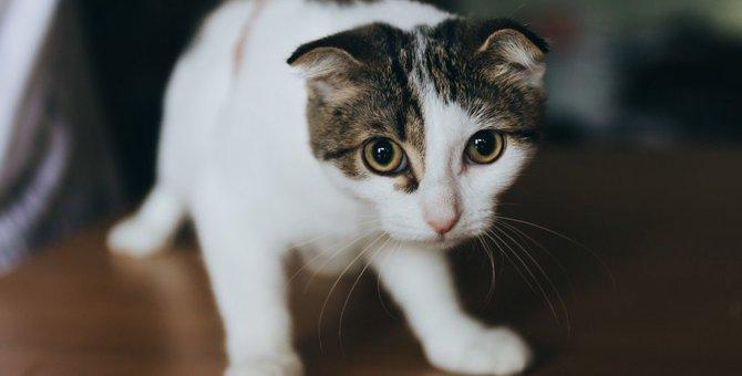 猫が助けを求めているサイン5つ