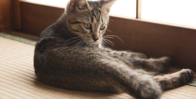 猫が『畳』を好きな理由は?爪とぎや粗相から畳を守る方法2選