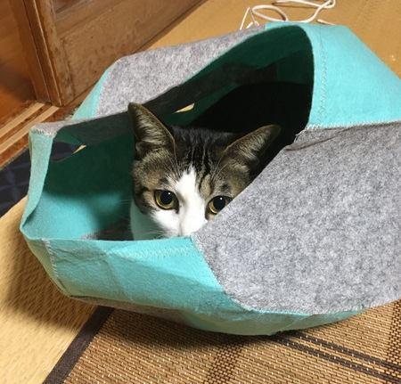 猫が『独占したい』と思っているもの5選