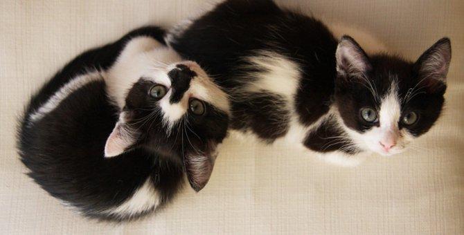 猫の性別で性格は違う?それぞれの特徴をご紹介!