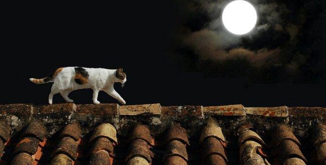 猫が夜しっかり寝てる…夜行性じゃないの?