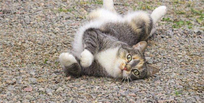 猫がふにゃふにゃなのはなぜ?柔軟な体の6つのヒミツ