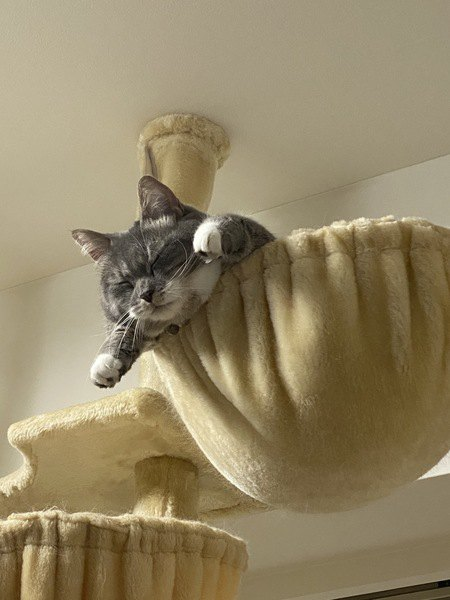 猫が気に入る『居場所』の作り方5つ