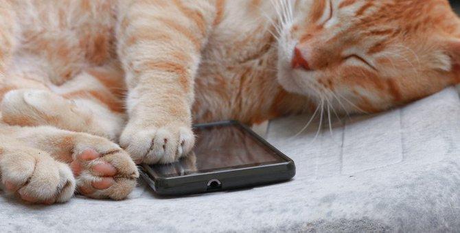 ダンボ―の猫「ニャンボー」のバッテリーがかわいい!種類や使い方