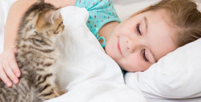 猫が起こしに来る理由4つ