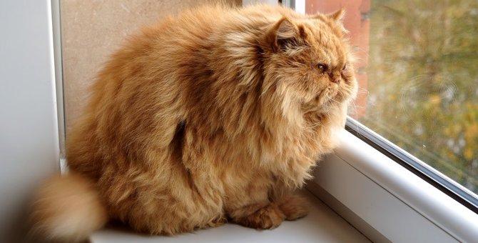 猫が『ずっと鳴いてくる』ときの原因3つと対処法