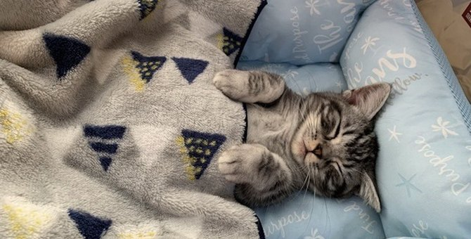 寝相の悪い飼い主は愛猫と一緒に寝ても大丈夫?気をつけるべき点5つ