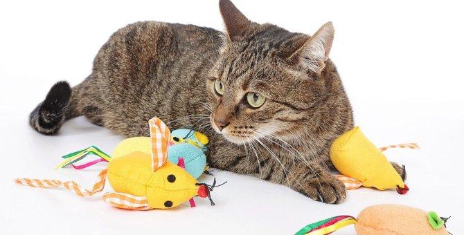 猫にも事情がある?!おもちゃで遊ばないときの理由4つ