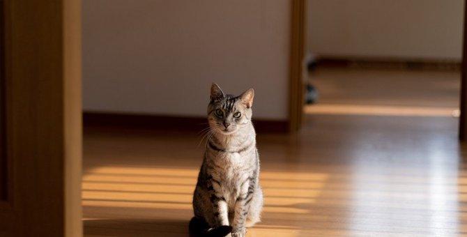 猫のストレスに繋がる『我慢』をさせない予防策4つ