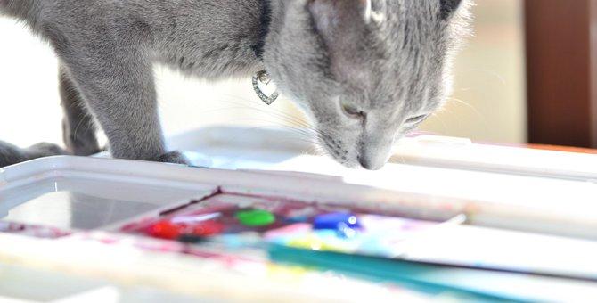 猫が『好きな色』『苦手な色』ランキングTOP3
