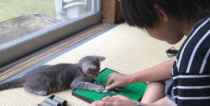 猫と飼い主の『なかよし度』がわかる5つのチェックリスト