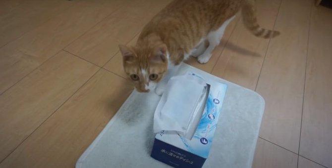諦めない猫ちゃん!ティッシュ箱の中にはお宝が?!